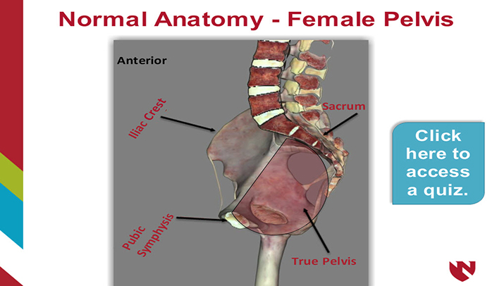 Anatomy of the Female Reproductive System – E-Gallery