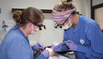 Students provide dental care